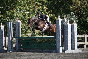davilli-sporthorses